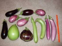 Eggplant come in various colors, shapes and sizes!
