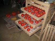 Creative use of a rack to ripen green tomatoes.
