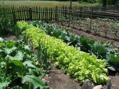 A simple organic garden!